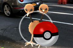 Cách tìm và bắt Pokémon hoang dã tốt nhất