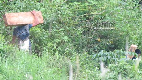 Phá rừng Pù Hoạt 2