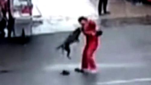 Chó pitbull điên cuồng tấn công người bị cảnh sát bắn chết