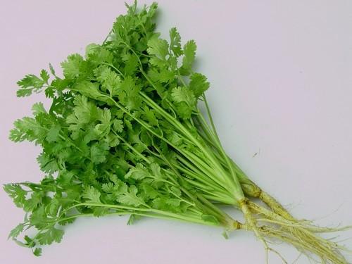 các loại rau củ mùa thu, tự trồng rau sạch