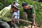 Công an, kiểm lâm tìm đến hiện trường vụ phá rừng pơ mu