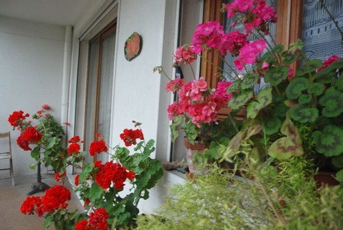 trồng rau ban công, việt kiều Pháp, trồng hoa ban công