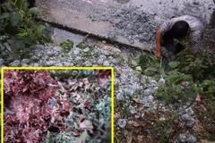 Dân mạng xôn xao vụ đống tiền giấy bị cắt vụn