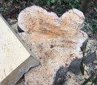 Kỷ luật 3 cán bộ để mất rừng ở Đắk Nông