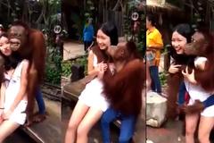 Clip thiếu nữ được khỉ âu yếm gây tranh cãi gay gắt