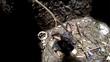 Chú chó thổn thức dưới giếng sâu khi biết mình được cứu