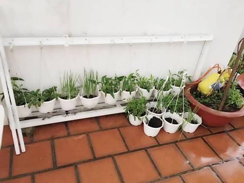 Vũ Thu Phương, thủy canh, trồng rau sạch