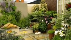 Mãn nhãn với những khu vườn trong nhà đẹp đến ngẩn ngơ