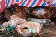 Đà Nẵng: Bao chất thải có chữ Formosa nhưng không liên quan FHS
