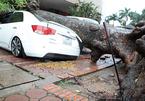 Hà Nội: Gió giật quật cây đổ, đè bẹp rúm ô tô