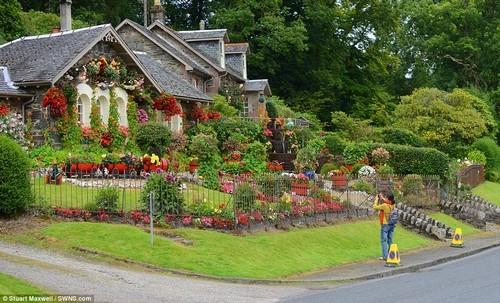 Khu vườn tràn ngập sắc hoa được chăm sóc bởi bàn tay của một người đàn ông yêu vợ