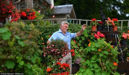 trồng hoa sân vườn, thiết kế sân vườn, mẫu sân vườn đẹp, khu vườn cổ tích