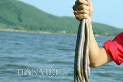 Lùng bắt trùn biển vì lời đồn thổi 'như Viagra'
