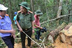 Bắt 4 đối tượng phá rừng pơ mu, 3 người đầu thú