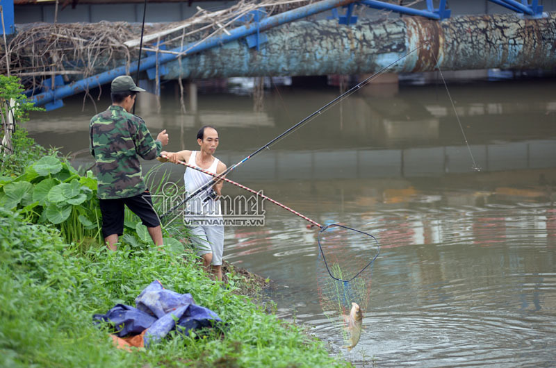 Người Hà Nội nườm nượp bắt cá trên sông Tô Lịch