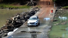 Cá sấu 'khủng' nằm giữa đường thách thức tài xế