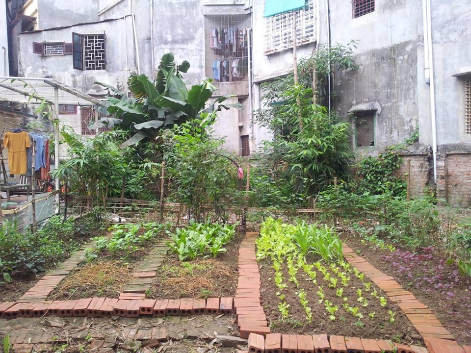 Khu vườn 400m² la liệt rau xanh, quả sạch, gà xịn giữa Thủ đô