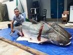 """Cặp cá tra """"khủng"""" nặng trăm ký từ Lào về Sài Gòn"""