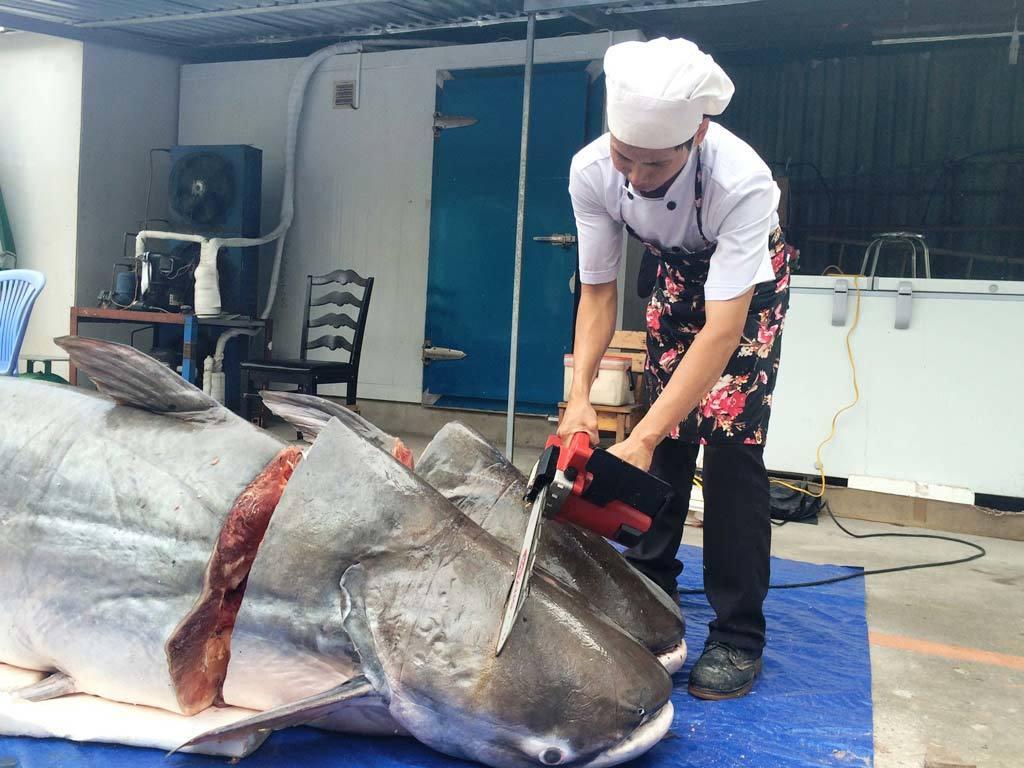 Cặp cá tra khủng 360kg từ Lào 'bơi' về Sài Gòn