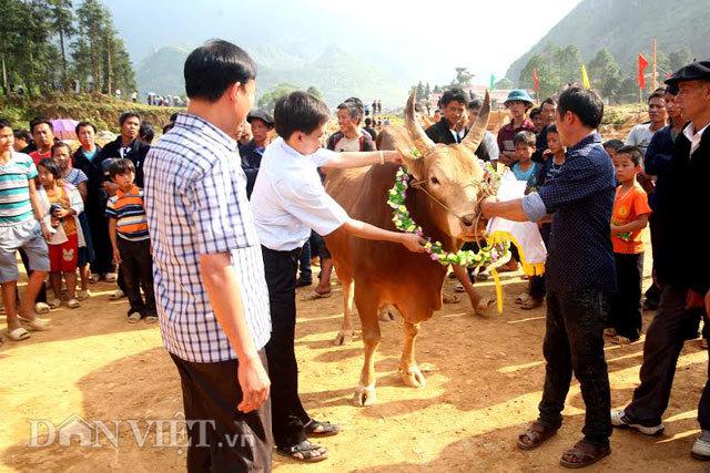 """""""Lực sĩ leo núi"""" bò vàng giá gần 100 triệu"""