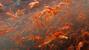 'Bão cua' khủng khiếp tấn công bờ biển Mỹ