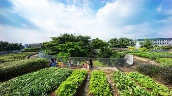 """Vườn rau xanh mướt trên mái nhà thuộc """"top công trình đẹp nhất thế giới"""" của KTS Võ Trọng Nghĩa ở Đồng Nai"""