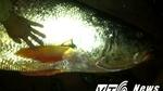 Chàng trai trúng… 'cá vàng' bạc tỉ chấn động Thái Bình