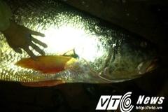 Chàng trai trúng... 'cá vàng' bạc tỉ chấn động Thái Bình