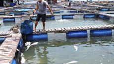 Dân mếu máo khi hàng tấn cá chết trắng, thiệt hàng tiền tỉ