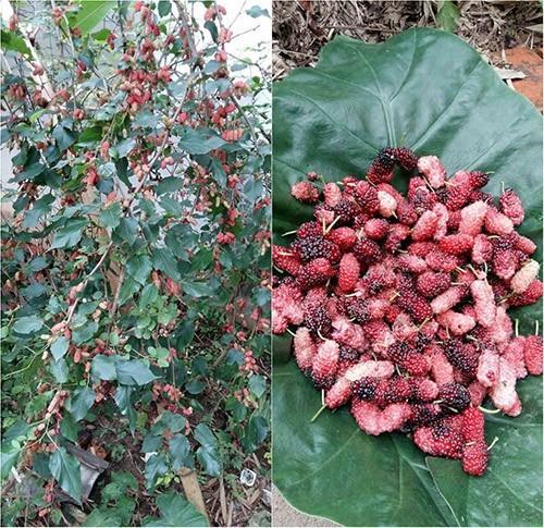 trồng rau sạch, vườn rau sân thượng, trồng rau thùng xốp, trồng rau nuôi gà trên sân thượng
