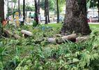 Thêm người chết do cây xanh đè ở Sài Gòn