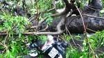 Hàng chục người nâng cây, cứu nạn nhân mắc kẹt