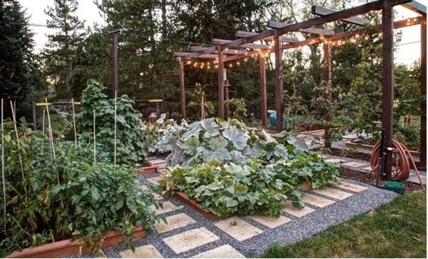 6 điều cần biết khi bắt đầu tự trồng rau sạch tại nhà
