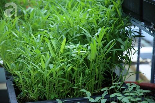 Vườn rau xanh mát trên sân thượng của nàng dâu 9x Sài thành xinh đẹp