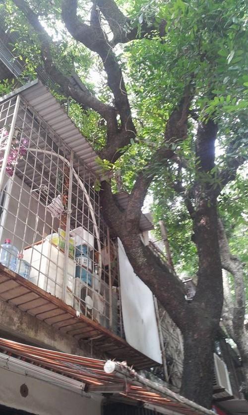 kì dị cây mọc xuyên nhà, những ngôi nhà cực dị ở Thủ đô