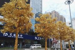 Ngân hàng trồng cây dát vàng trước cửa