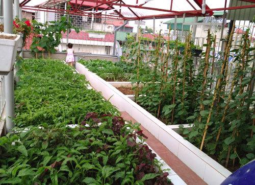 Bỏ trăm triệu trồng vườn rau sân thượng đẹp như công viên