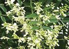 10 siêu cây hút khí độc nên trồng ngay trong nhà - ảnh 5