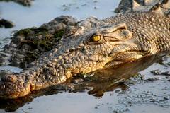 Clip rợn người khuất phục cá sấu khổng lồ