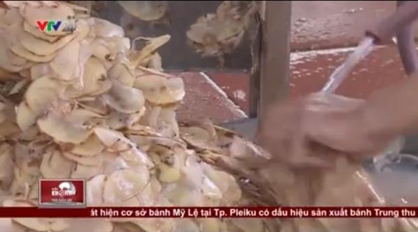 Hành phi làm từ khoai tây thối rữa, mọc mầm