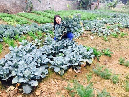 bỏ việc lương trăm triệu, trồng rau, nuôi lợn, nuôi gà, rau sạch, thực phẩm an toàn, sân thượng, ban công, thực phẩm bẩn, ung thư
