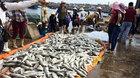 Thanh Hóa: Gần 50 tấn cá chết bất thường trong đêm
