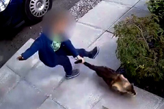 Cậu bé hành hạ mèo và cái kết đau đớn