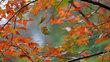 Đi dọc Việt Nam ngắm lá phong tuyệt đẹp vào mùa thu