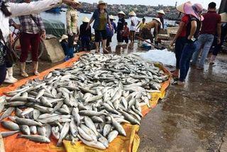 Gần 50 tấn cá chết bất thường là do thủy triều đỏ