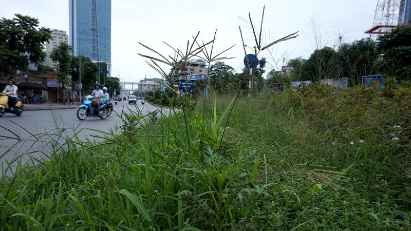 Dừng chi tiền tỷ, cỏ mọc um tùm khắp nẻo đường Thủ đô