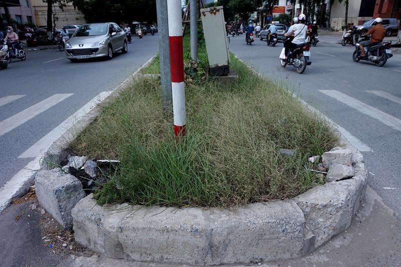 Cắt cỏ, chăm sóc cây cảnh, đường đẹp nhất, Hà Nội, Thủ đô, mọc um tùm