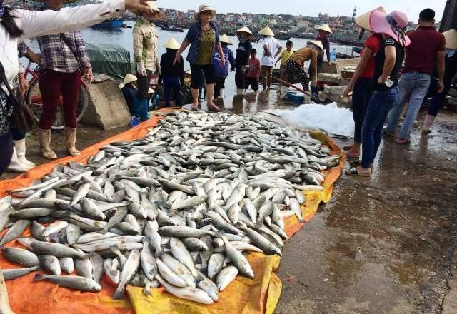 50 tấn cá chết: Kiểm tra đường ống lọc hóa dầu Nghi Sơn