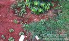 Người phụ nữ chết bí ẩn trong vườn với con dao trên ngực