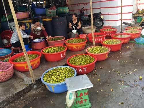 Điểm mặt hai loại hồng giòn Trung Quốc tràn chợ